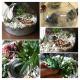 Just add plants Agavi